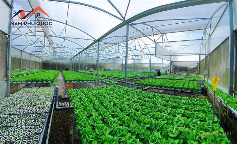 Khu vườn rau hữu cung cấp nguồn nguyên liệu chất lượng cho nhà hàng